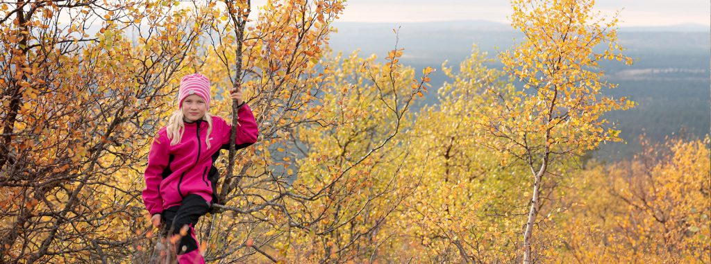 Ruska-aikaan Lapin luonto on parhaimmillaan monien oranssin ja keltaisen sävyjen valloittamana.
